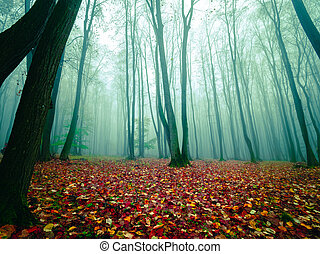Autumn morning in misty forest