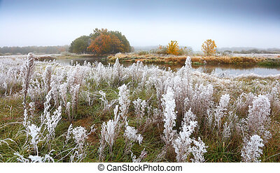 Autumn morning with grass in frost