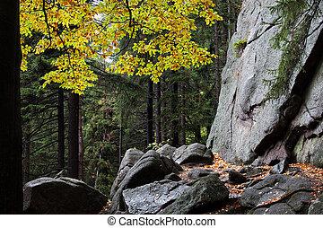 Autumn Mountain Forest Wilderness