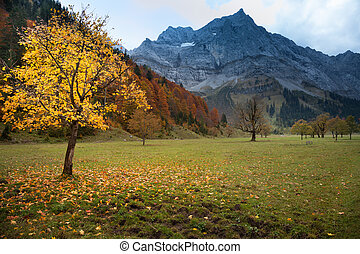 Autumn mountain landscape in the Alps with maple tree