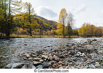 Autumn mountain landscape. Mountain river against the background of yellowed trees.