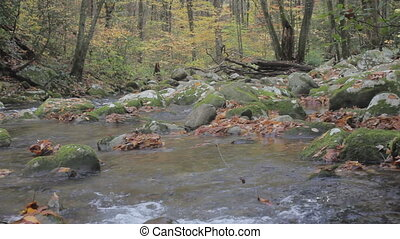 Autumn mountain trout stream - tracking along a fast moving...