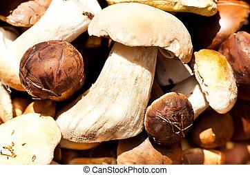Autumn mushrooms mix