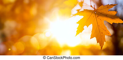Autumn nature backdrop; Autumn leaves background, yellow maple leaf against sunny sky