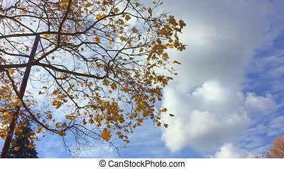 Autumn nature background with space for text- orange autumn...