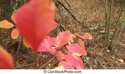 Autumn Nature. Change the focus from the background to the...