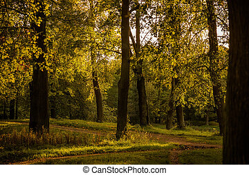 Autumn nature in park at sunset