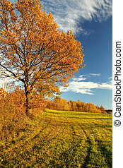 Autumn nature with blue sky