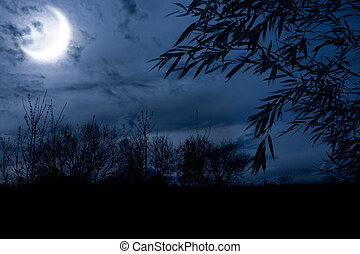 autumn night forest alight with bright moon in clouds