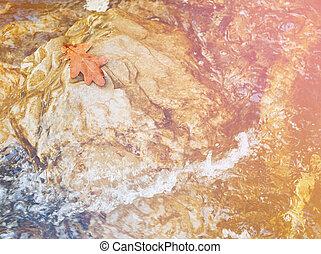 Autumn oak leaf on stone - One autumn yellow oak leaf on...