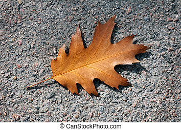 Autumn oak leaf. on the pavement
