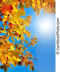 Autumn oak leaves against the blue sky