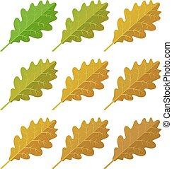 Autumn oak leaves set