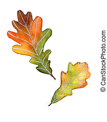 Autumn oak leaves watercolor on white background