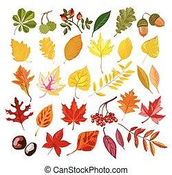 Autumn oak, maple, rowan leaf foliage fall collection vector...