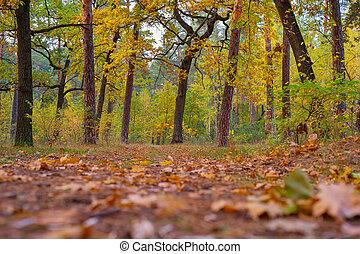 autumn oak trees forest leaves