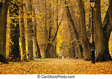 Autumn October colorful park. Foliage trees alley in park