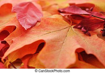 autumn odchodzi, barwny