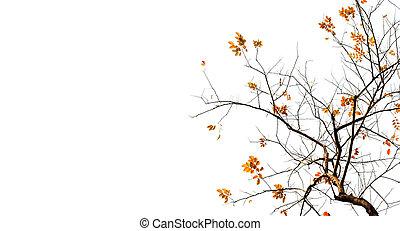 autumn odchodzi, tło