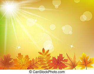autumn odchodzi, w, światło słoneczne, tło
