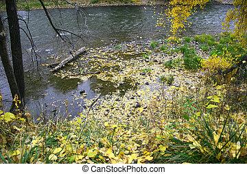 Autumn on River - Fallen autumn leaves float on the Arkansas...