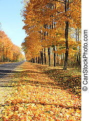Autumn on road two