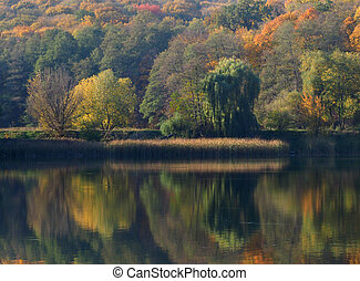 Autumn on the forest lake: green, yellow and red trees are reflected in the mirror of water, a strip of thickets of yellowed reeds divides the photograph horrible.