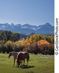 Autumn on the Ranch - Horse pasture at the Double RL Ranch ...