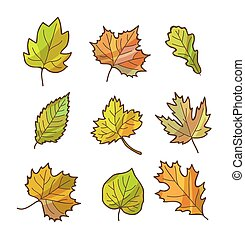 Autumn or fall leaves set, isolated on white background.