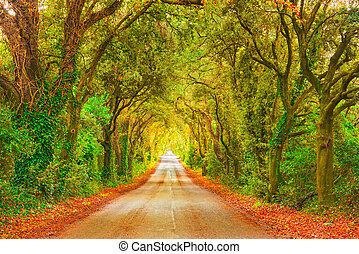 Autumn or fall, trees tunnel road on sunset. Maremma, Tuscany, Italy Europe.