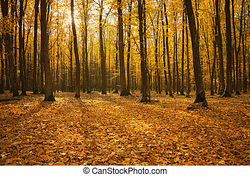 Autumn orange forest with fallen leaves