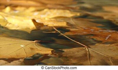 Autumn orange leaves floating water surface