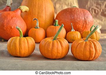 Autumn Orange pumpkins