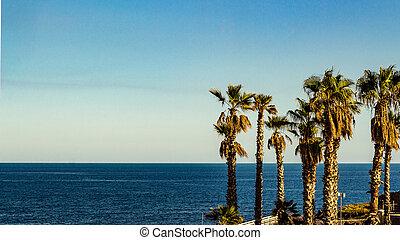 Autumn palm trees