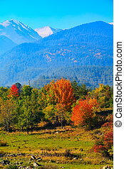 autumn panorama background with colorful green