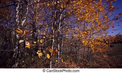 Autumn panorama in forest at field with a sun