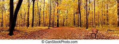 Panoramic view of bright yellow colored autumn trees in a Michigan state park
