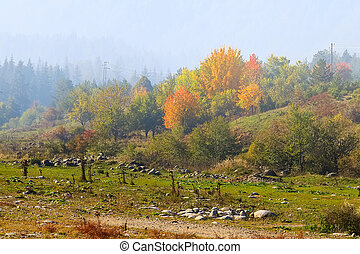 autumn panorama with colorful trees