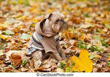 autumn., parc, chien