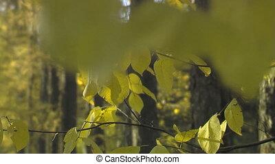 autumn park 002 - Panoramic shot of autumn branches. Rack...