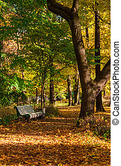 Autumn park alley with bench