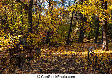 Autumn park alley with benches