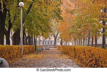 Autumn Park. Alley with yellow trees and fallen leaves. Fall