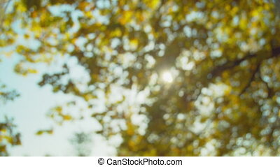 Autumn park at sunny day. Colorful oak leaves against sun. Fall colors. Blue sky. Handheld shot with natural movement. Blurred out of focus background.