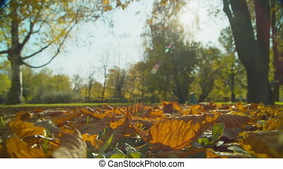 Autumn park at sunny day. Fallen leaves in grass. Handheld macro shot with natural movement.
