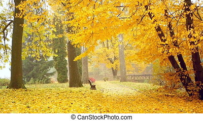 Autumn park fog leaves