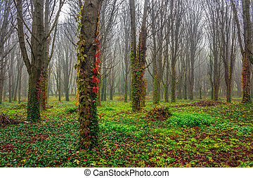 autumn park in fog - park trees and foliage in autumn...