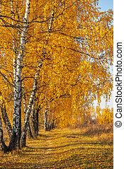 Autumn park in warm sunny day