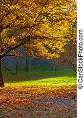 Autumn park landscape. Oak on foreground.