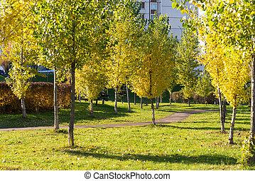 Autumn park on a sunny day